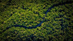 certificazione crediti di carbonio
