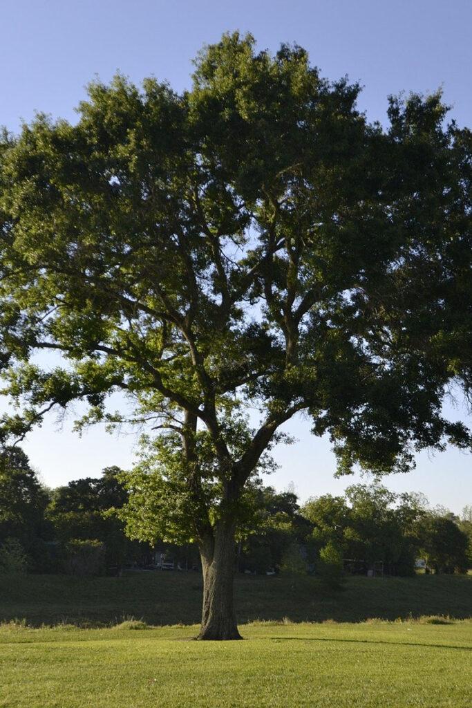 Madaproject fai il test riforestazione riduzione della deforestazione nei Paesi in Via di Sviluppo